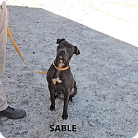 Adopt A Pet :: Sable - Washington, GA