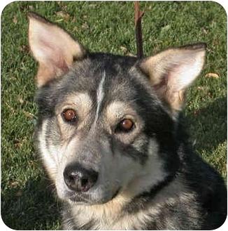 RILEY-Adopt.Pend.   Adopted Dog   Boise, ID   Alaskan ...