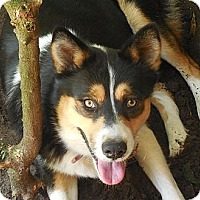 Adopt A Pet :: Poochie - Ormond Beach, FL