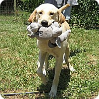 Adopt A Pet :: Luke - Spring, TX
