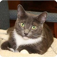 Adopt A Pet :: Vicky - Bonita Springs, FL