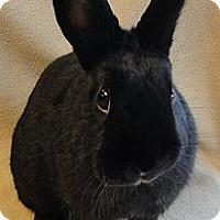 Adopt A Pet :: Raven - Los Angeles, CA