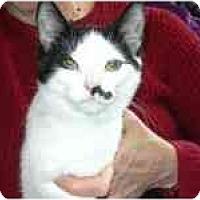 Adopt A Pet :: Kobe - Arlington, VA