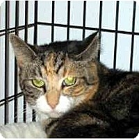 Adopt A Pet :: Gracie - Medway, MA
