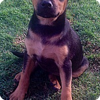 Adopt A Pet :: Bosco - Long Beach, CA