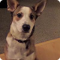 Adopt A Pet :: Meesha - Chewelah, WA