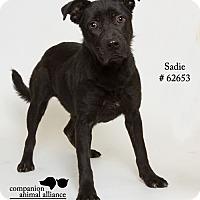 Adopt A Pet :: Sadie - Baton Rouge, LA