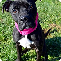 Adopt A Pet :: Roxy/ MJ D-65144 *Pooch with Perks* - Westampton, NJ