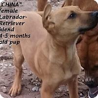 Adopt A Pet :: China - El Cajon, CA