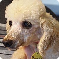 Adopt A Pet :: Bianca - Prole, IA