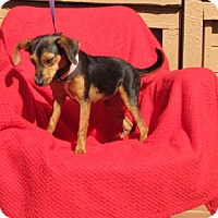 Adopt A Pet :: Jubilee - Oakland, AR