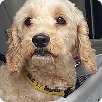 Adopt A Pet :: WILSON - Rancho Cucamonga, CA