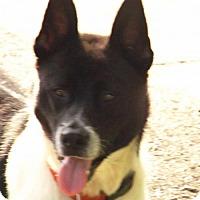 Adopt A Pet :: Duncan - Oxford, MS