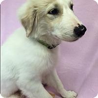 Adopt A Pet :: Jo Jo - Groton, MA