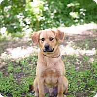 Adopt A Pet :: Mr. Bean - Lewisville, IN