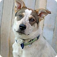 Adopt A Pet :: Porgie - Salt Lake City, UT