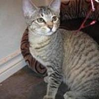 Adopt A Pet :: Kylie - Arlington, TX