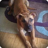 Adopt A Pet :: Brody - Framingham, MA