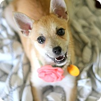 Adopt A Pet :: Anna - Dalton, GA