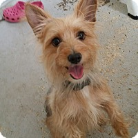 Adopt A Pet :: Snookie - Fort Myers, FL