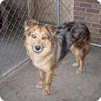 Adopt A Pet :: KM -Sandi - Lafayette, LA