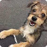 Adopt A Pet :: Dixon - La Verne, CA