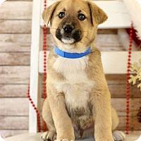 Adopt A Pet :: Tony - Waldorf, MD