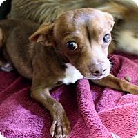 Adopt A Pet :: KH2 Augie - Odessa, TX
