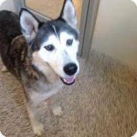 Adopt A Pet :: Ragnar - Aiken, SC