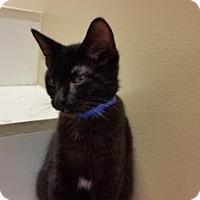 Adopt A Pet :: Skittles - Cumming, GA