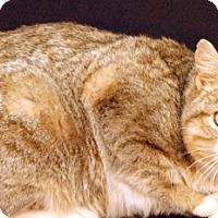Adopt A Pet :: Tutu - Newland, NC