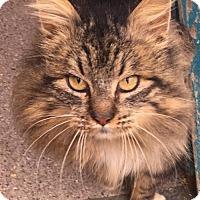 Adopt A Pet :: Viktor - Burlington, WA