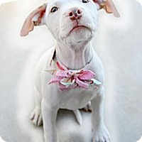 Adopt A Pet :: Maia - La Habra, CA