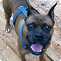 Adopt A Pet :: Mosby - Hazard, KY