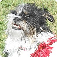Adopt A Pet :: Penelope - Lockhart, TX
