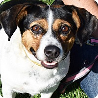 Adopt A Pet :: Dolly - Huntley, IL