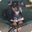 Adopt A Pet :: Tater & Tot