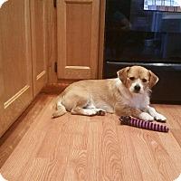Adopt A Pet :: Jefe - Bellingham, WA