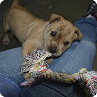 Adopt A Pet :: Holden - Meridian, ID
