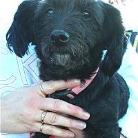 Adopt A Pet :: Mitzi - Salem, OR