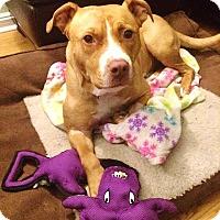 Adopt A Pet :: Julia~Meet me!~new pics/video! - Glastonbury, CT