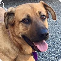 Adopt A Pet :: Bonnie - Detroit, MI
