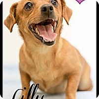 Adopt A Pet :: Lilly and Ginger (Reduced) - Washington, DC