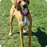 Adopt A Pet :: Frankie - Lisbon, OH