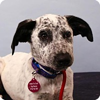 Adopt A Pet :: Freckles - Berkeley Heights, NJ