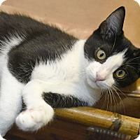 Adopt A Pet :: Triscuit - Knoxville, TN