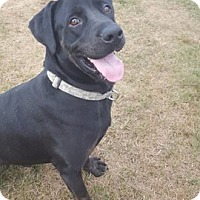 Adopt A Pet :: Rolo - Lebanon, ME