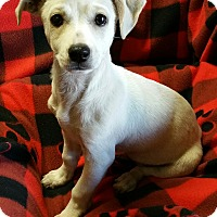 Adopt A Pet :: Evan - Los Angeles, CA