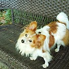 Adopt A Pet :: Renny (in GA)