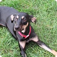 Adopt A Pet :: Gemma *REBOUND* - Appleton, WI